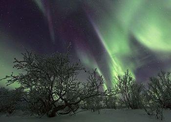inizio-anticipato-dell'inverno-russo.-se-son-rose…