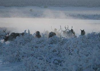 """siberia:-il-grande-gelo-""""fuori-tempo-massimo"""""""