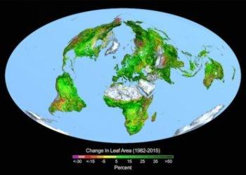il-costante-aumento-della-co2-starebbe-provocando-un-incremento-della-vegetazione-terrestre