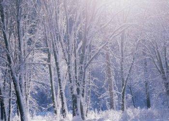 neve-e-gelo-di-primavera-in-pieno-aprile:-il-memorabile-episodio-del-2003
