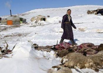 """mongolia:-il-""""dzud""""-porta-gelo-e-neve-e-uccide-quasi-400-mila-capi-di-bestiame"""