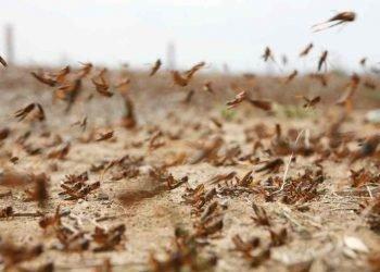 disastro-invasione-locuste-in-africa:-colpa-del-meteo