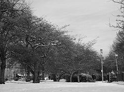la-neve-nelle-citta-degli-stati-uniti-d'america