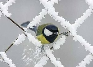 briciole-di-neve-e-nulla-piu,-quando-si-sta-ai-margini-delle-colate-artiche
