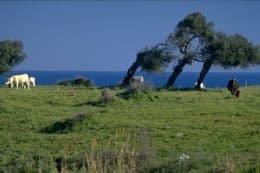 il-marin,-vento-primaverile-ed-estivo-dell'entroterra-ligure-e-del-basso-piemonte