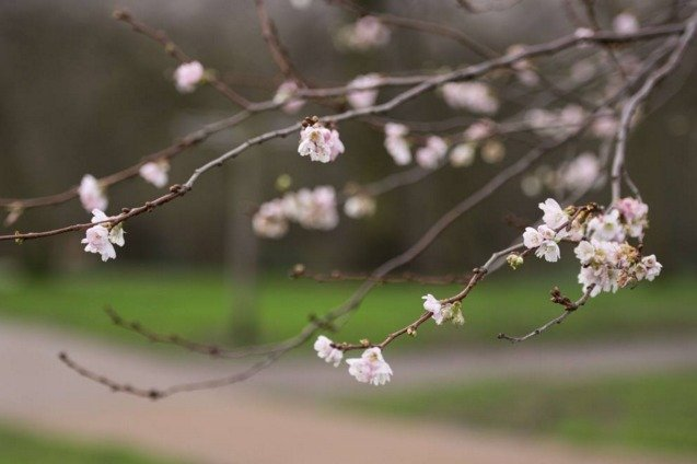europa senza inverno alberi in fiore come in primavera 41619 1 1 - Europa senza inverno, alberi in fiore come accade in piena primavera