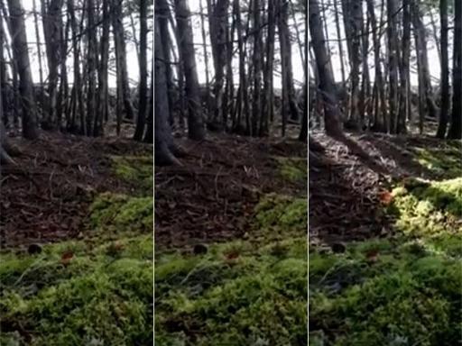"""foresta che respira il terreno si alza e si abbassa fenomeno naturale 40949 1 1 - Foresta che """"respira"""", il terreno si alza e si abbassa: fenomeno naturale?"""